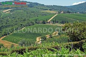 Italy, Tuscany, Greve in Chianti, vineyards