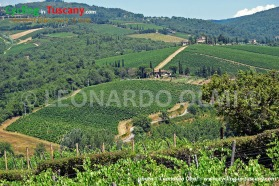 Italy, Tuscany, Greve in Chianti, vineyards