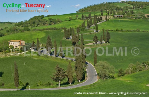 Italy, Tuscany, Monticchiello, cypress trees, cycling bike tours