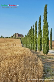 Italy, Tuscany, Val d'Orcia, cypress trees, cycling bike tours