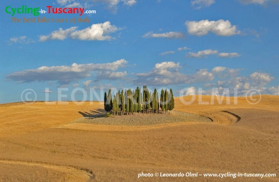 Italy, Tuscany, Val d'Orcia, cycpress trees, cycling bike tours