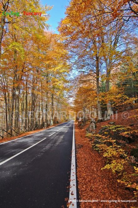 Italy, Tuscany, Amiata Mount, wood forest, cycling bike tours