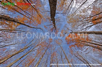 Italy, Tuscany, Amiata Mount, wood forest