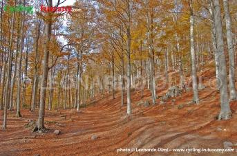 Italy, Tuscany, Amiata woods