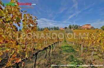 Italy, Tuscany, Chianti, vineyards