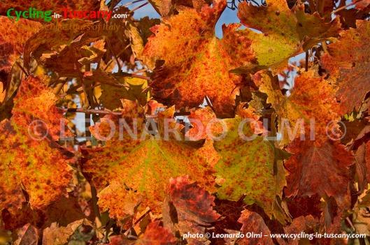 Italy, Tuscany, Chianti, vineyards
