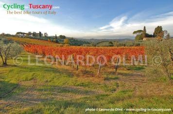 Italy, Tuscany, Chianti, vineyard