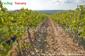 Italy, Tuscany, Chianti, vineyards, grapes